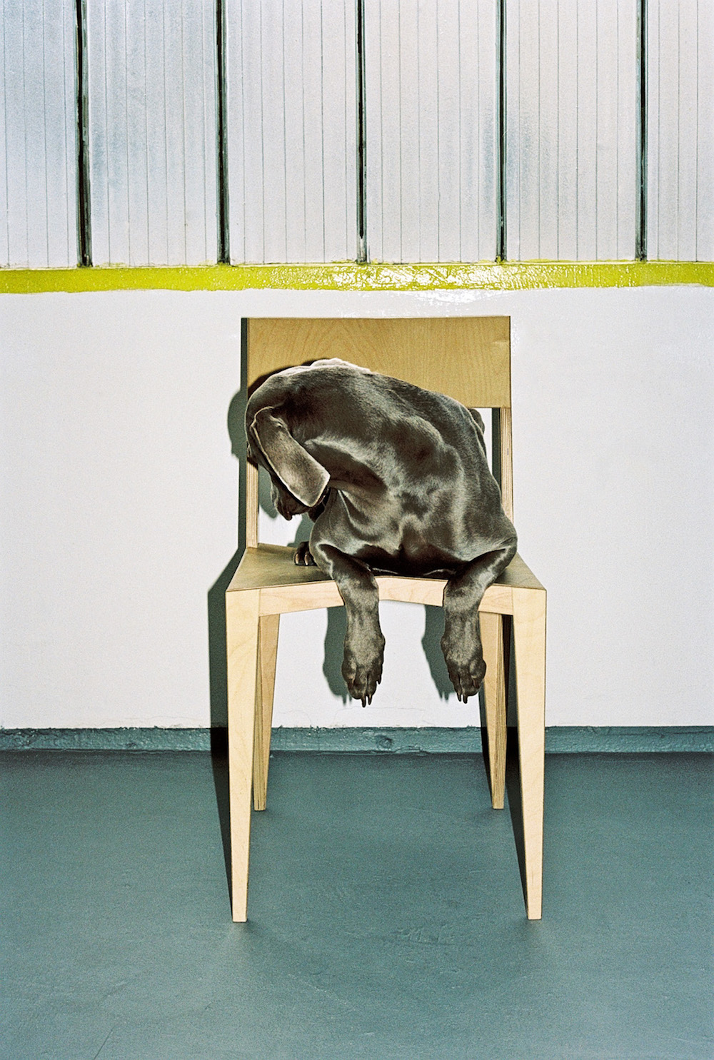 photo, photos, photography, photographer, photographers, dog, dogs, chair, chairs, stripes, stripe, flash