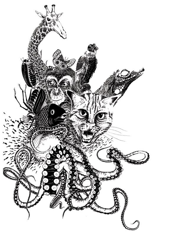 """Ink """"Hand drawing"""" realistic """"black and white"""" detailed animals animal cat giraffe Butterfly fish monkey octopus beetle"""