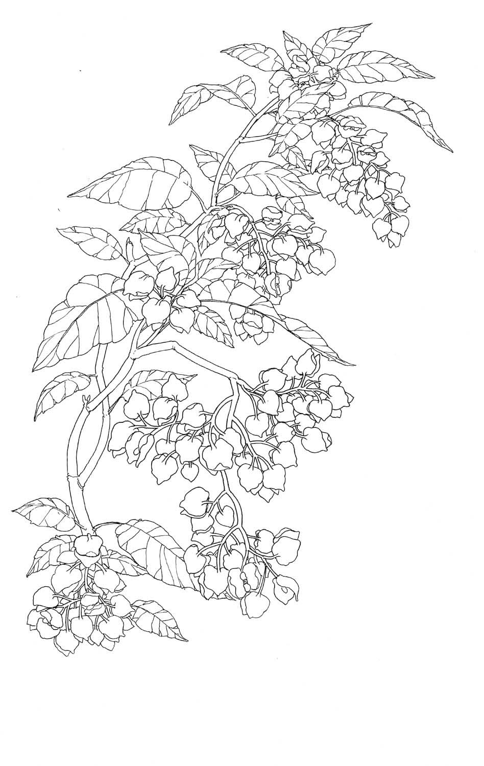 """Ink """"Hand drawing"""" realistic """"black and white"""" detailed plant plants"""