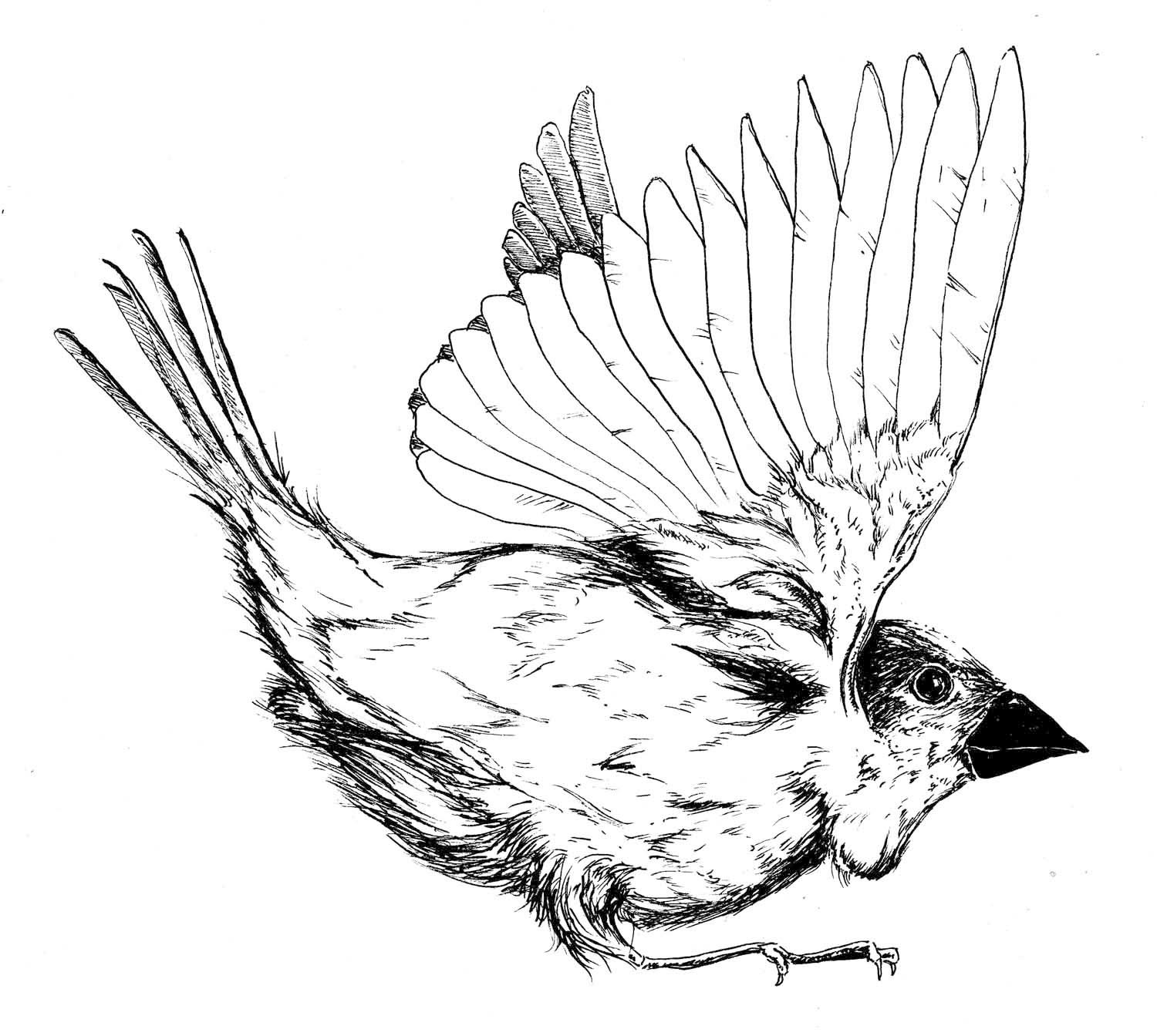 """Ink """"Hand drawing"""" realistic """"black and white"""" animal bird"""