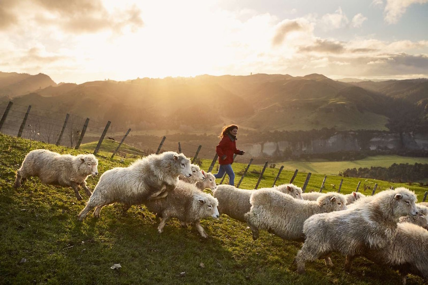 woman sheep landscape green sun sunny shepherd