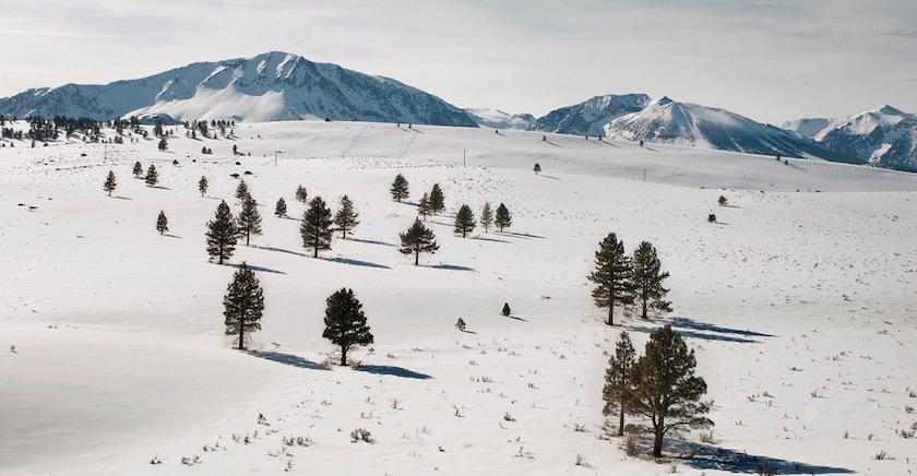snow winter white cold bright sun shadow tree trees mountain mountains