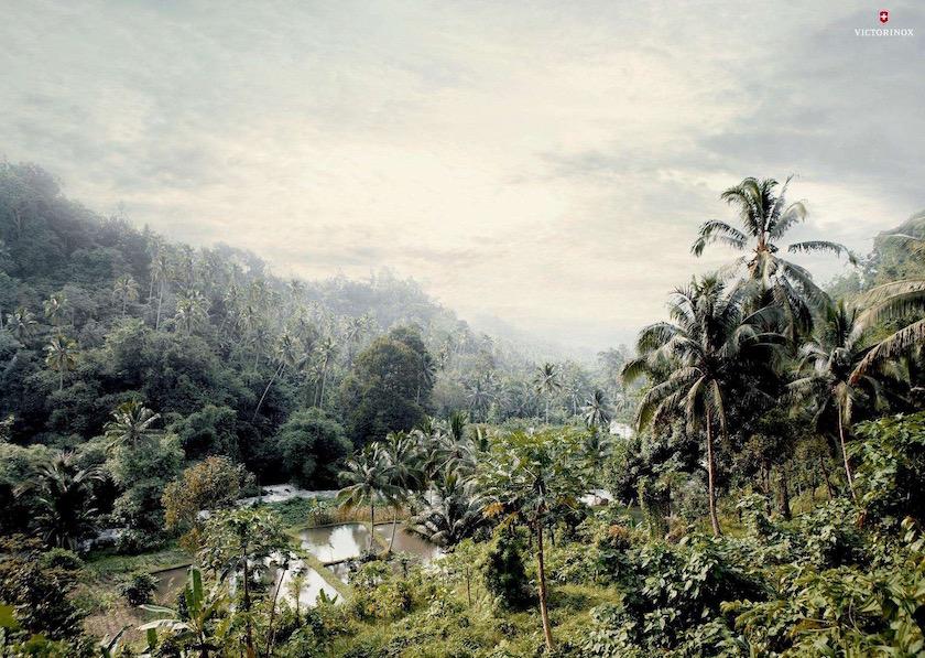 forest green sunny sun warm summer plant plants rainforest arm farming asia sky tree trees