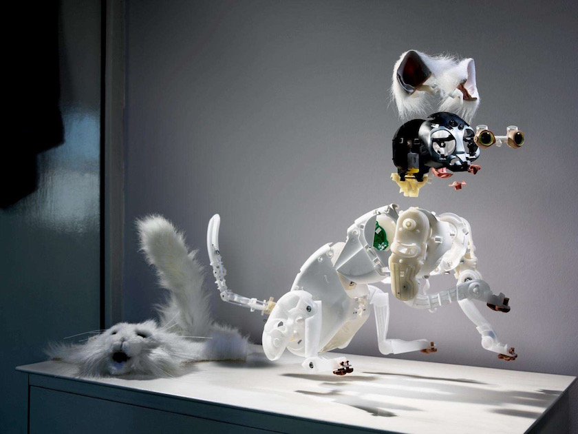 photograph photographer photo photographers photography cat robot toy skeleton white fur meow skin artificial white