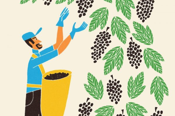 """Hand Drawing"" 50's Outlines outline line lines vector ""digitally colored"" people man work wine wine-grower vine grapevine vineyard grape harvest grape-harvest beverage food"
