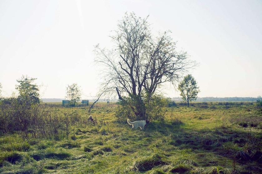 photo photos photography photographer photographers sun sunny tree trees dog field lawn