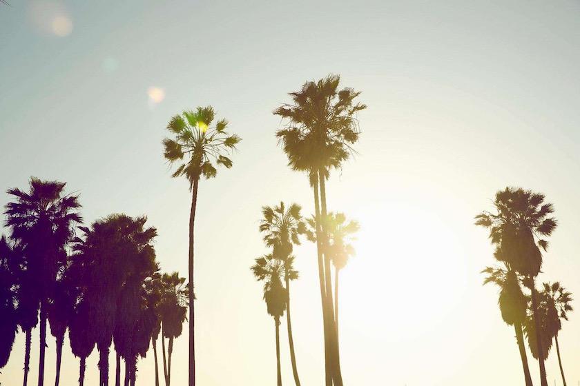 photo photos photography photographer photographers sun sunny summer palm palms sunflare