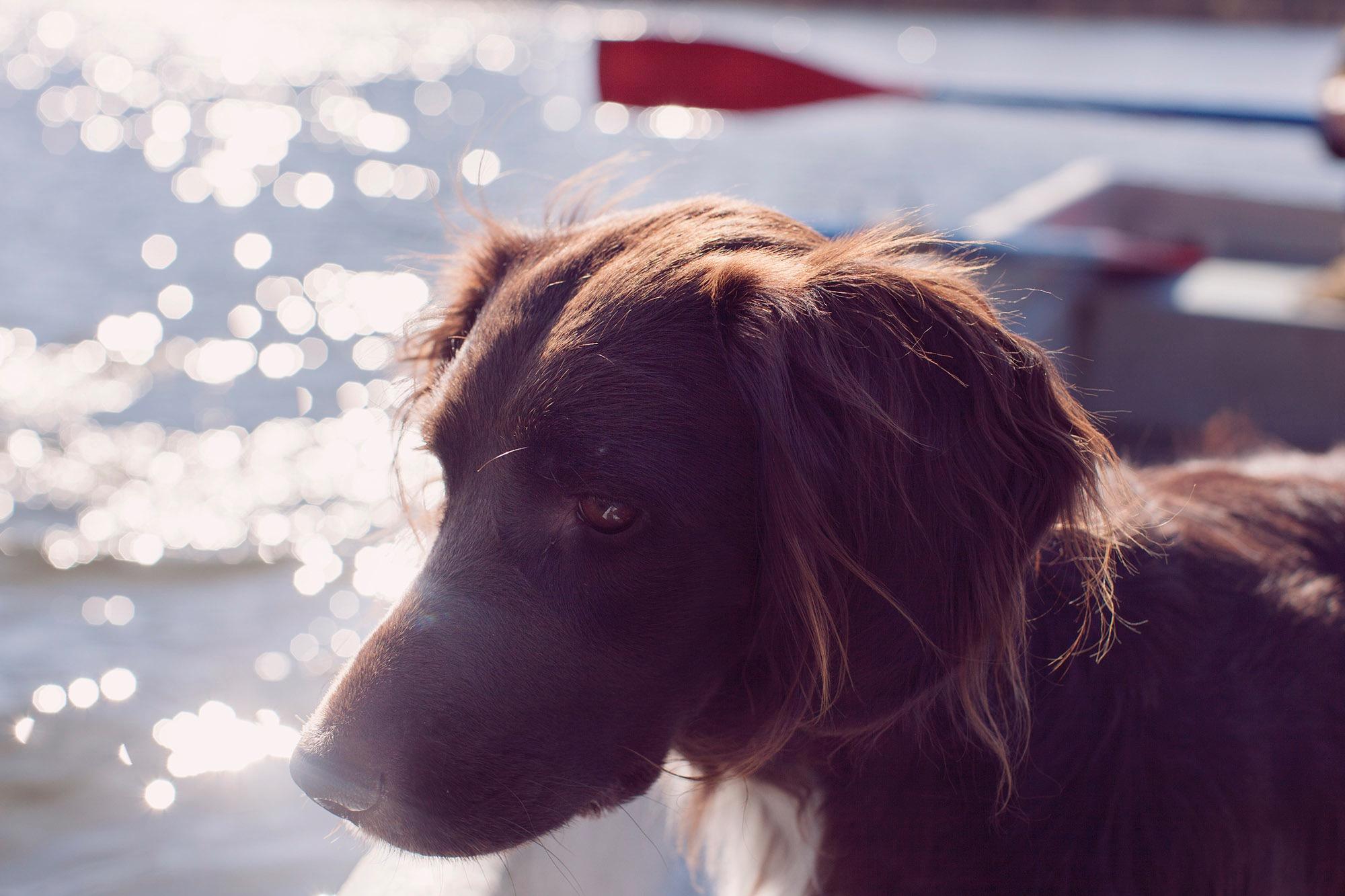 photo photography photographer dog