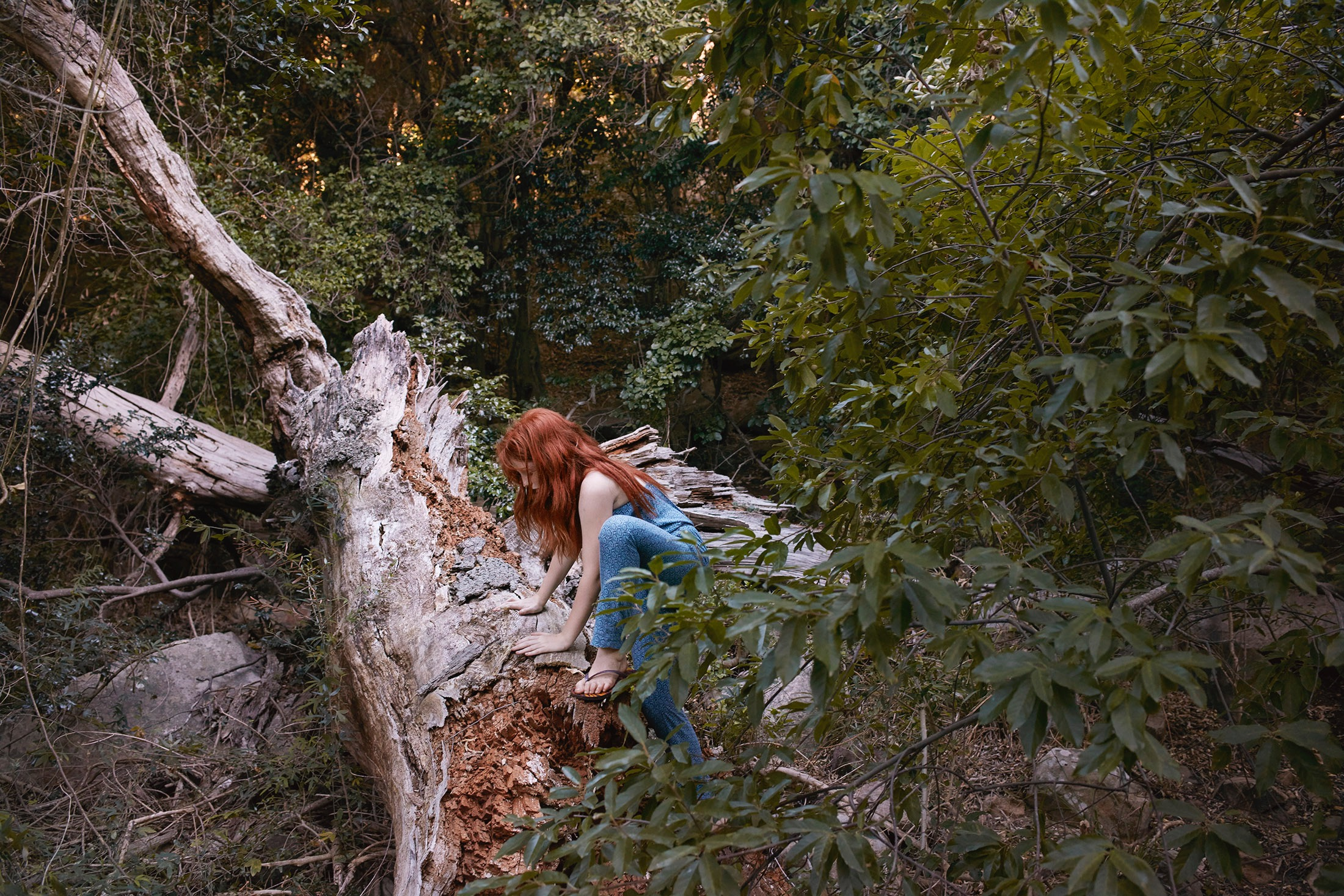 photo photography photographer forest woods tree leaved green girl kid child children ginger climb climbing