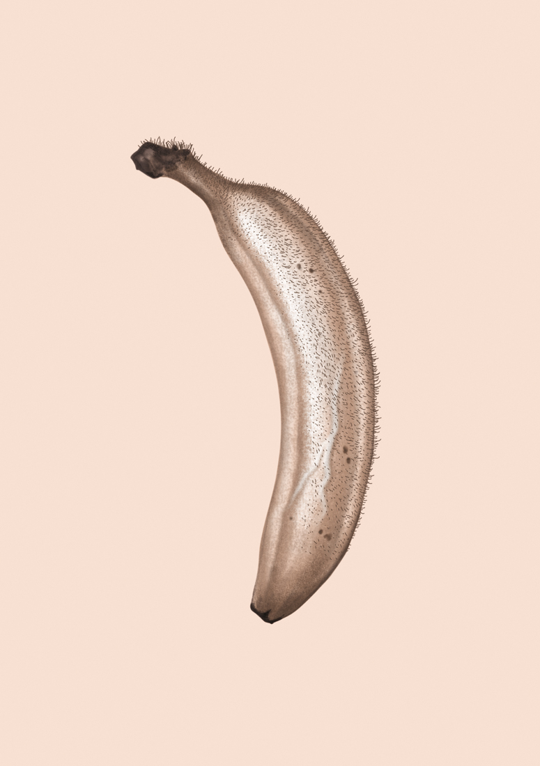 illustration, illustrations, illustrator, illustrators, banana, hairy, veins, veiny, flesh, skin, fruit