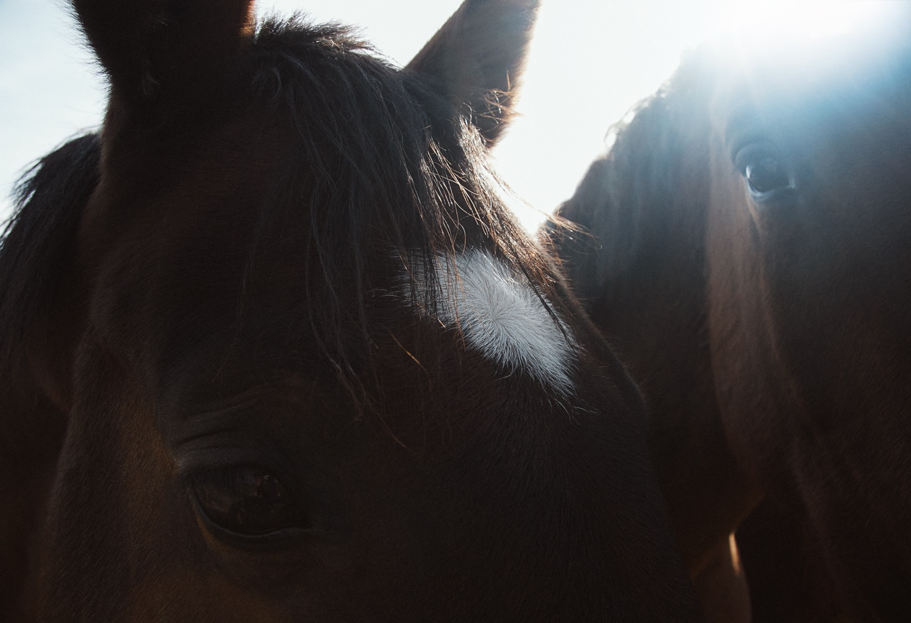 ­photo, photos, photography, photographer, photographers, sunlight, sun, horse, horses, closeup, close up