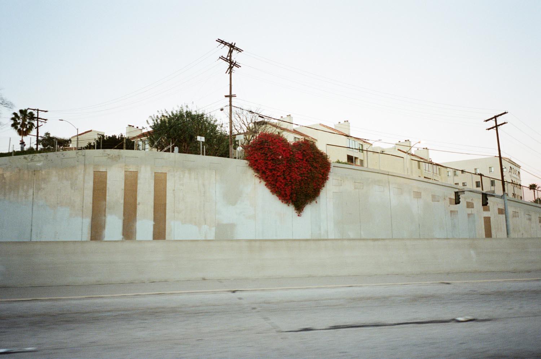 wall street flowers heart