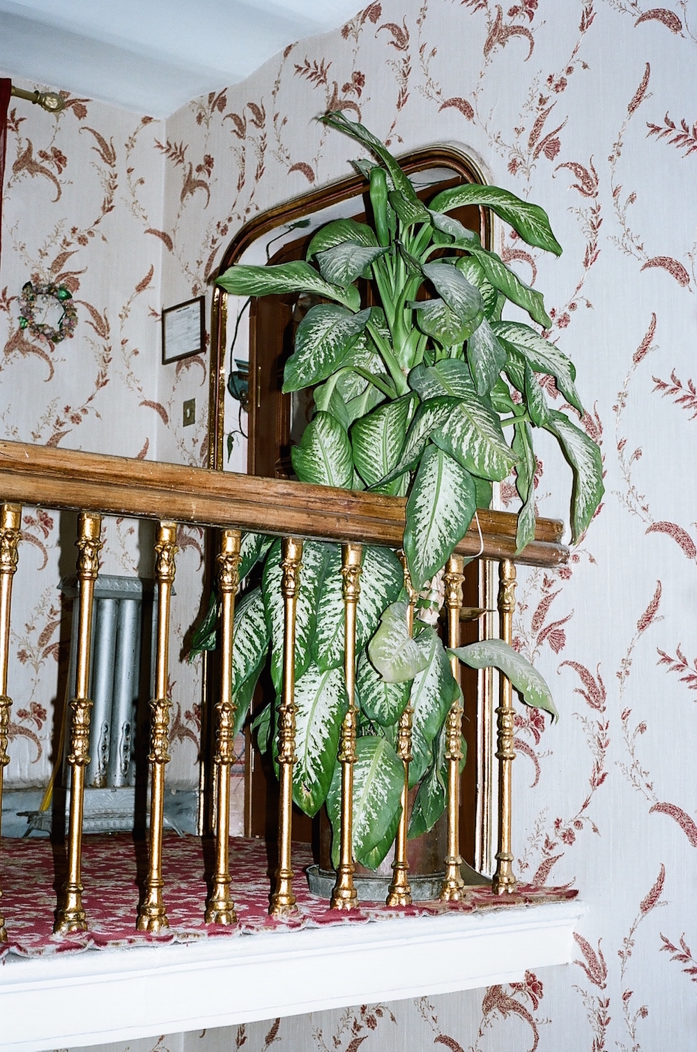 photo, photos, photography, photographer, photographers, plant, plants, botanical, stairs, flash, gold, wood