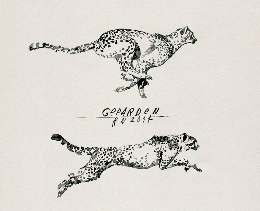 animal animal cheetah dotted running fast speed
