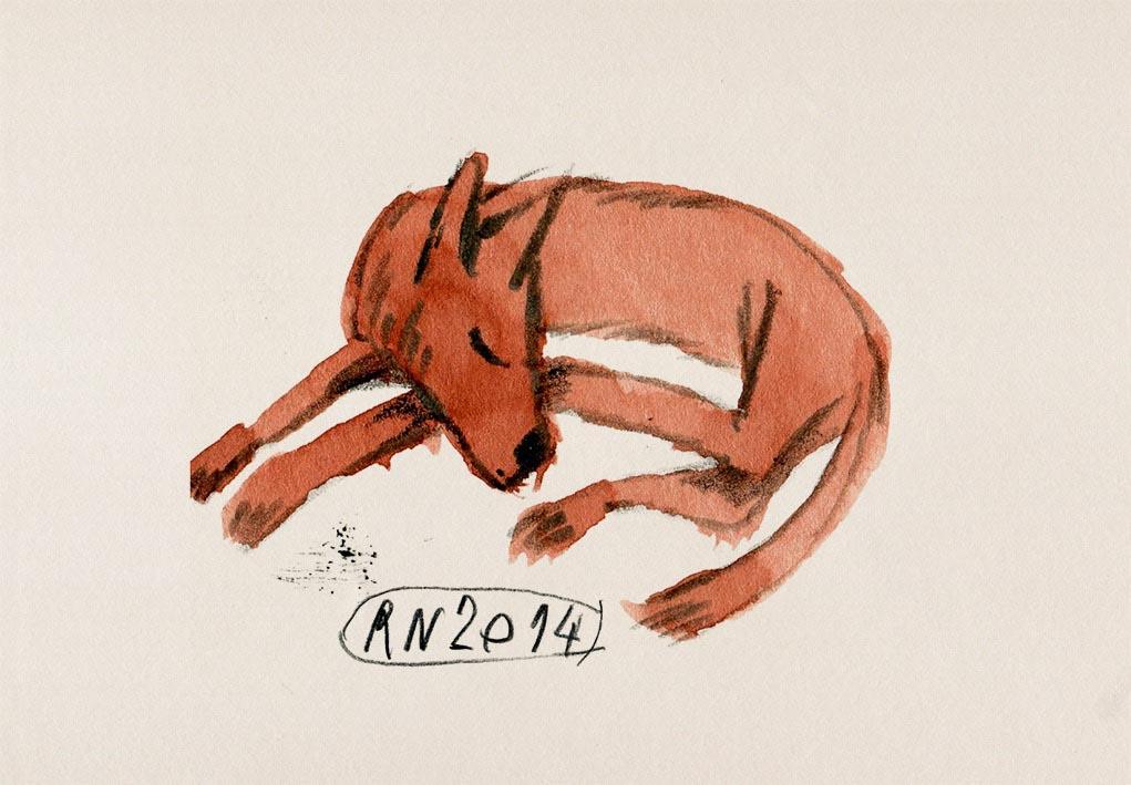animal animal dog dogs fox