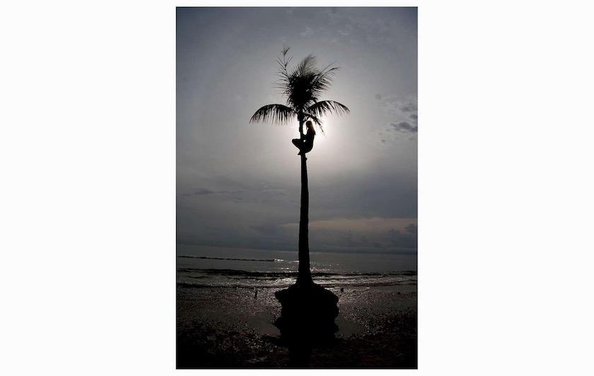 palm sun beach