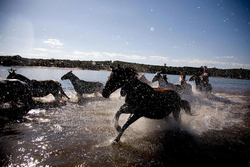 horse horses ride animals water wet sunny sun warm summer lake river