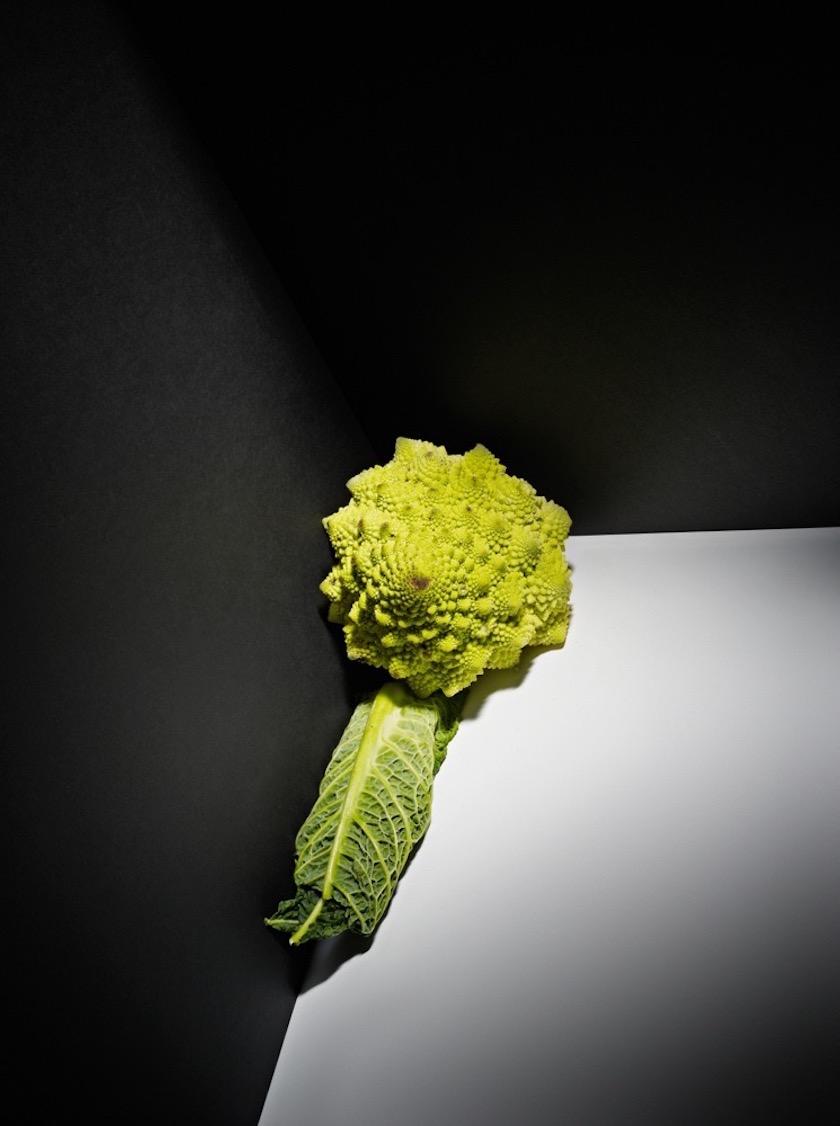grey black cabbage