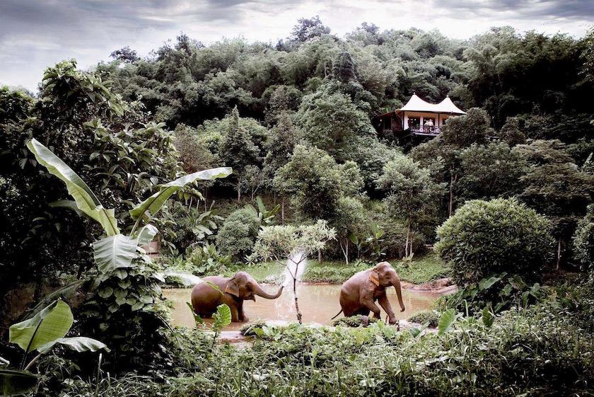 forest tree trees green plant plants elephants elephant animal animals rainforest