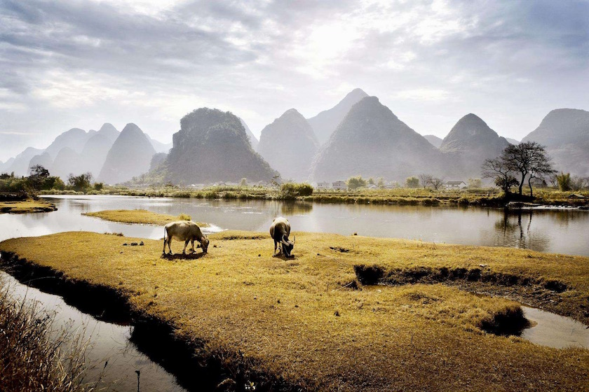 water lake lotus plant plants stairs temple hill cow cows animals animal asia river