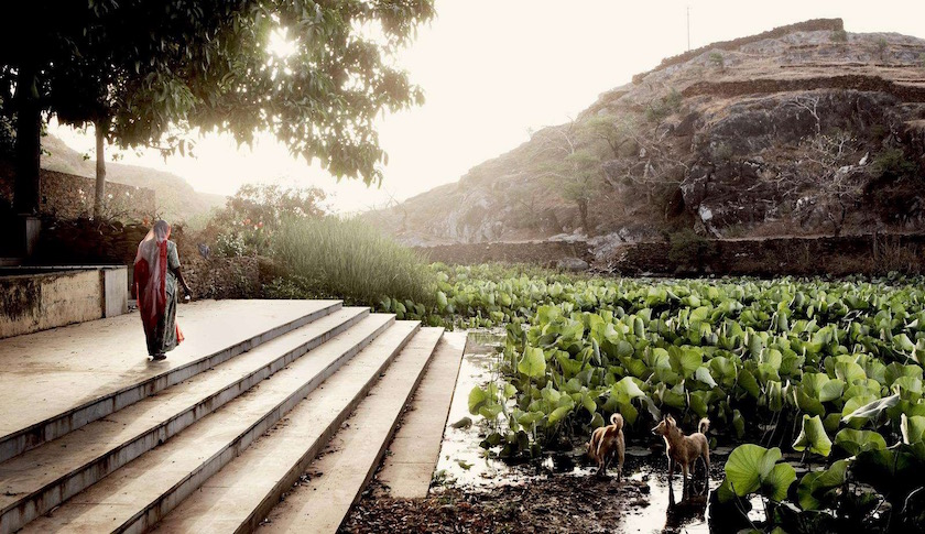 india water lake lotus plant plants stairs temple hill dogs dog animals animal asia