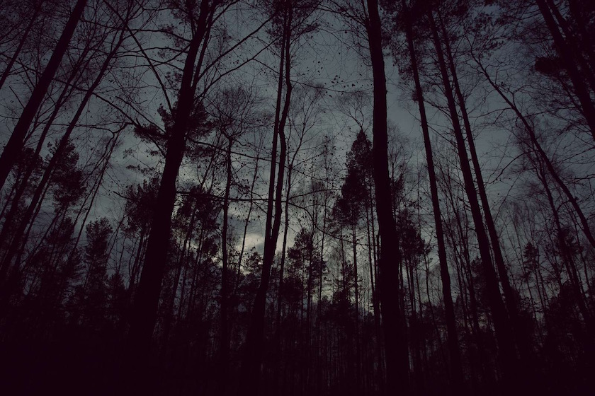photo photos photography photographer photographers night dark evening tree trees forest