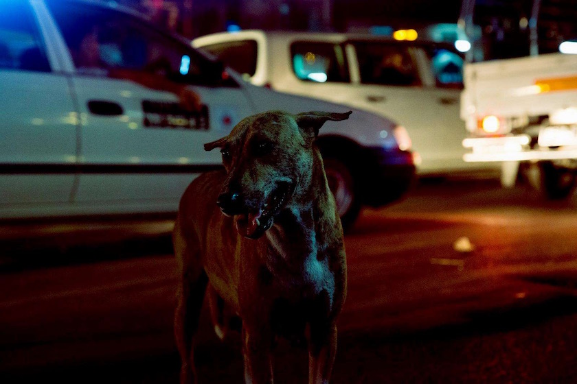 photo photos photography photographer photographers night dark dog street animal animals