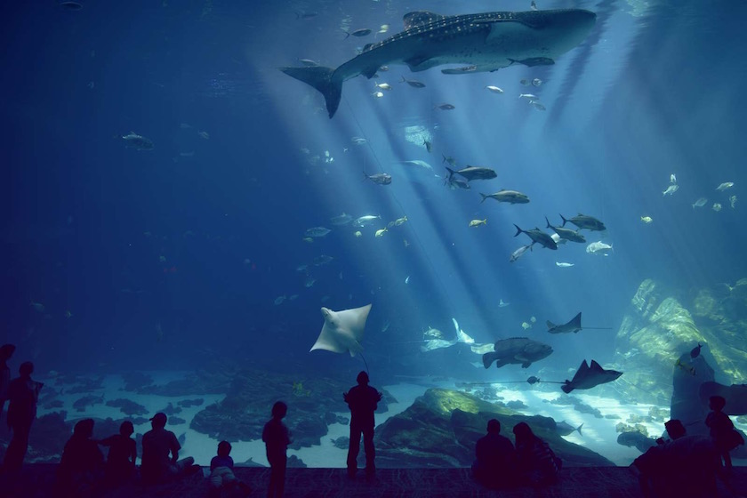 photo photos photography photographer photographers fish shark aquarium visitor visitors child children amazed look watch silhouette