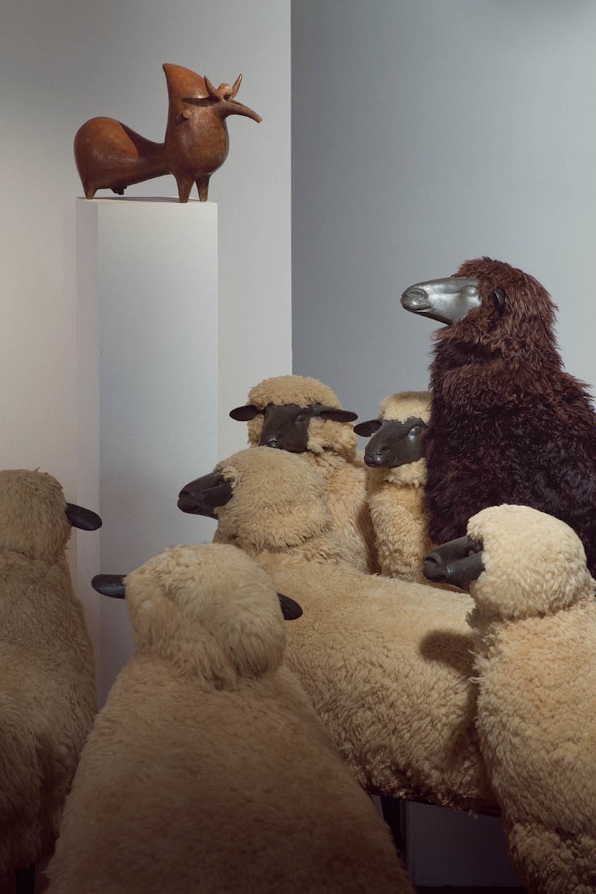 photo photos photographer photographers photography sheep museum look watch visit visitor visitors