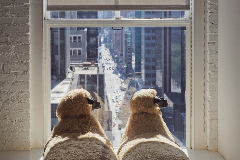 photo photos photographer photographers photography window sheep building buildings backside