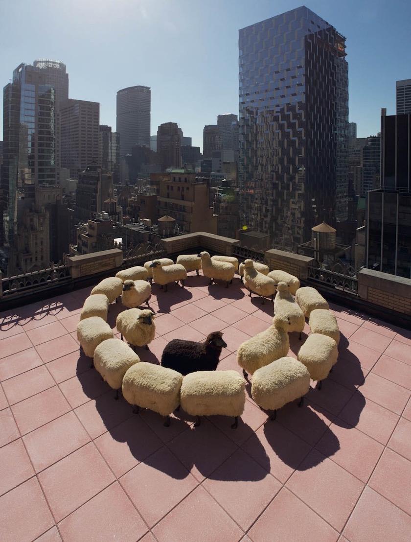 photo photos photographer photographers photography roof terrace sheep circle building buildings