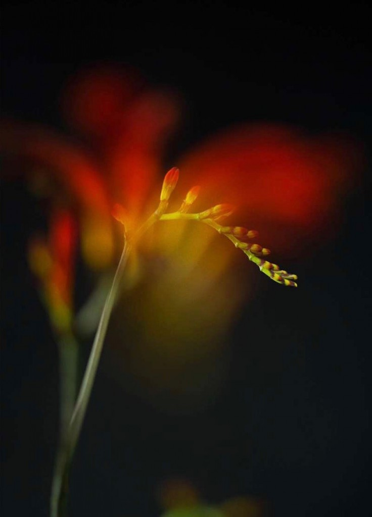 photo photos photographer photographers photography blurry flower plant red