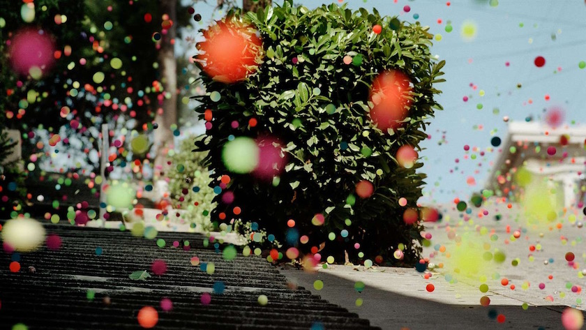 photo photos photographer photographers photography plant green colorful ball balls jump jumping bound bounding rubber