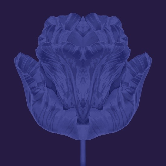 illustration, illustrations, illustrator, illustrators, flower, flowers, bloom, blooming, dreamy, symmetry, symmetrical